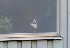 Ibland är det skönare att titta ut genom fönstret än att stirra på skärmar.