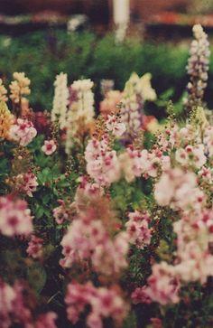 (via ocean of nectar   Flickr - Photo Sharing!)