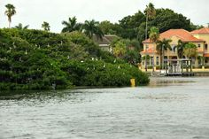 Downtown St Pete yacht charter