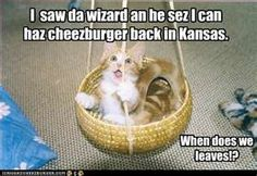 Kitty in the land of OZ