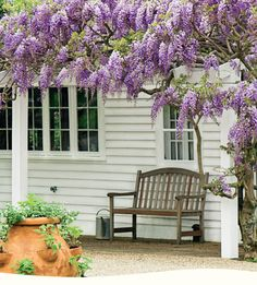 Gorgeous wisteria at White Flower Farm