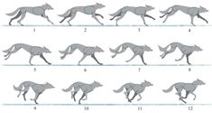 wolf movement - Google Search Moose Art, Wolf, Silhouette, Google Search, School, Animals, Wolves, Timber Wolf