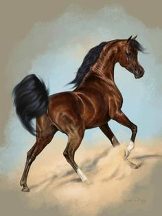 This beautiful Egyptian bred stallion epitomizes the fantasy of the Arabian horse. Pretty Horses, Horse Love, Beautiful Horses, Animals Beautiful, Horse Photos, Horse Pictures, Horse Drawings, Animal Drawings, Arabian Art