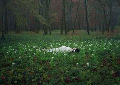 Izima Kaoru, Landscape with a Corpse