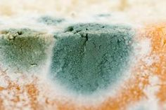 Is It Safe to Cut Off the Mold and Eat the Rest?