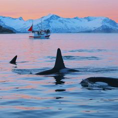 All Inclusive Whale Watching - Explore the Arctic, Motorized boat, Whale Watching, Coastal areas