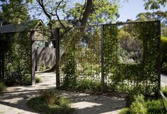 T.C.L - Taylor Cullity Lethlean : Projects : Adelaide Botanic Gardens Native Garden #GardenVines