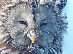 Bosuil in de sneeuw by Marnix Bijl
