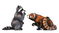 How to Draw Animals: Red Pandas and Raccoons by Monika Zagrobelna, So similar, yet so different - learn about cute firefox and sly raccoon! Raccoon Drawing, Raccoon Tattoo, Animals And Pets, Baby Animals, Cute Animals, Draw Animals, Cute Drawlings, Cute Art, Red Panda Cute