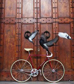 pretty birds pretty bike Colnago track 👍 👌 🔥 na Cycling Art, Cycling Bikes, Old Wooden Doors, Fixed Gear Bicycle, Bike Photography, Commuter Bike, Bike Style, Bike Parts, Vintage Bicycles