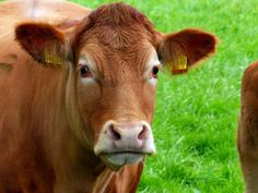 European Public Health Alliance   In our press release, EPHA reiterated that current dietary patterns high in animal products are incompatible with the aim of avoiding dangerous climate change.