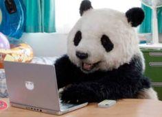 Panda on computer Panda Love, Cute Panda, Panda Panda, Funny Animal Videos, Cute Funny Animals, Animals And Pets, Baby Animals, Teddy Bear Cartoon, Baby Panda Bears