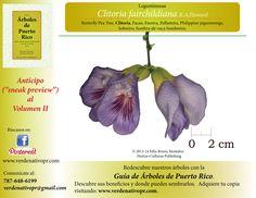 Redescubre el Arbol de Clitoria...Guía de Árboles de Puerto Rico