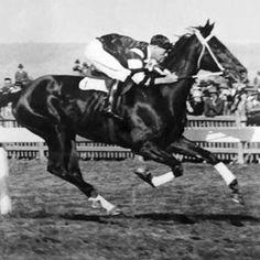 Phar Lap....what a horse....