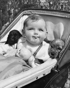 Chronically Vintage: Celebrating with 25 darling black and white vintage dog photos! Vintage Humor, Vintage Dog, Vintage Children, Funny Vintage Photos, Vintage Photographs, Baby Animals, Cute Animals, Dog Photos, Old Pictures