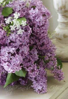 I love Sensation-  the lilacs that have the white outlone around each single flower! They're very eye catching, with the contrasting dark purple and white colors. I saw my first one at my customer's home and couldn't stop staring at it- very unusual, but pretty (little fragrance though- disappointing).