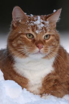 Snowy Shogo by BlastOButter on deviantART