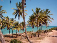 Coconuts - Natal - RN - Brasil