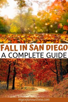 Find the top fall events in San Diego including the best pumpkin patches in San Diego and the best things to do in San Diego in the fall. #sandiegotravel #californiatravel | San Diego fall activities | San Diego in the fall | San Diego fall | fall in San Diego California | San Diego in fall