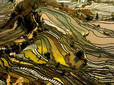 The rice terraces of Yunnan, China, are carved into the hillside. Different types of vegetation lend the landscape its alternating hues.