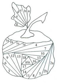 Pumpkin Paper Iris Folding