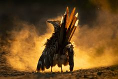 Grand Prix, Photography Competitions, Photography Awards, Wildlife Photography, White Photography, Greater Roadrunner, Concours Photo, Great Grey Owl, Nocturne