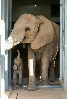 Moeder en bay olifantje