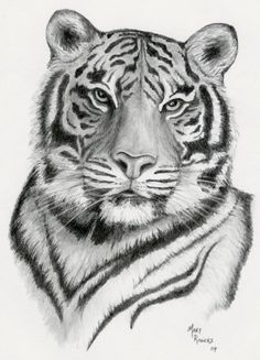 coloring for adults - kleuren voor volwassenen Tiger Drawing, Tiger Art, Painting & Drawing, Tiger Sketch, Beautiful Drawings, Cool Drawings, Drawing Sketches, Sketching, Colouring Pages