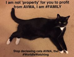 I know pets are more than 'owner's property'. They are sentient beings with feelings. The AVMA wants pets to remain in the 'property' status because veterinarians could be sued for providing inadequate care aka sued when they botch declaws or if down the road kitty develops bone pieces or claw regrowth. Pets are property to make money according to the AVMA. They want pets to remain 'property'. Other countries like France view pets as sentient beings, NOT property.
