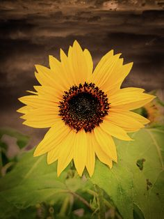 Summer Days, Dandelion, Wall Art, Flowers, Plants, Flora, Royal Icing Flowers, Dandelions, Floral