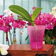 Aby boli vaše orchidey opäť vo forme
