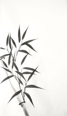 Bamboo Silhouette Clip Art Bamboo Clipart Image