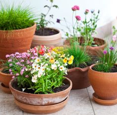 Top 10 Houseplants for cleaner air