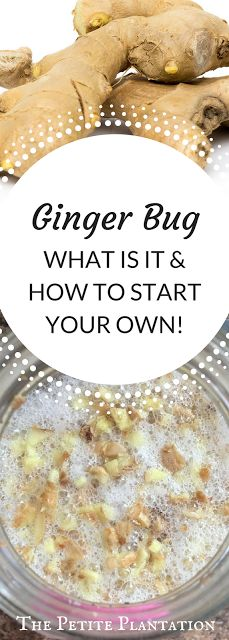 The Petite Plantation: All About Ginger Bug