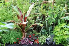 Tropical garden plants for the UK climate