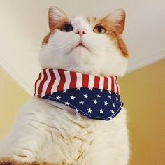 American flag bandanas are the purrfect accessory!