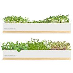 You could call it a windowsill planter or a miniature farm.