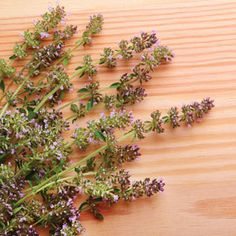 Harness the healing prowess of disinfectant, immunity-boosting thyme with these natural remedies for colds, coughs and sore throats.data-pin-do=