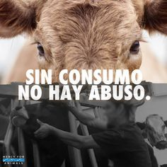 Mercy For Animals – Inspirando compasión Mercy For Animals, Save Animals, Animals For Kids, Animals And Pets, Vegan Blogs, Vegan Recipes, News Memes, Go Veggie, Vegan Quotes