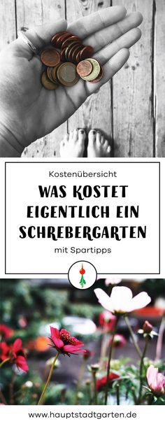 Wie finde ich eigentlich einen Schrebergarten (in Berlin Pinterest