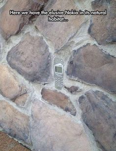 Here we have the elusive Nokia in its natural habitat...
