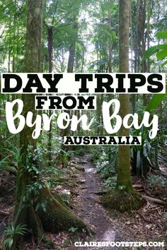 If you're looking for things to do around Byron Bay, check out these Byron Bay day trips. From waterfalls in Byron Bay, towns near Byron Bay to places near Byron Bay, these are the best day trips from Byron Bay that you'll enjoy. Australia House London, Brisbane Australia, Coast Australia, Visit Australia, Australia Funny, Australia Trip, Scuba Diving Australia, Australia Travel Guide, Koh Tao
