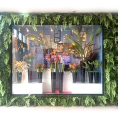 HAUS 658 tropical window display
