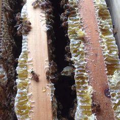 Natural honey supplier#honey#food#like4like#giveaway#honeybee