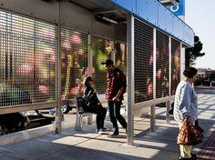 catherine widgery transforms bus stops into virtual gardens