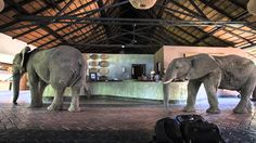 """""""A new heaven and a new earth"""" really exists. Or this must be its vestibule.  Elephants of Mfuwe Lodge"""