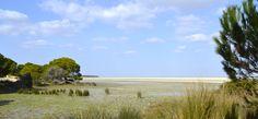 Lucio del Membrillo en #Doñana #RocioJubilar