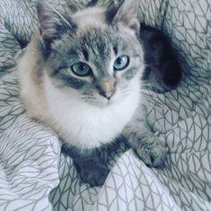 #cat#kittys#cute Cat Art, Monster High, Cute, Animals, Instagram, Gatos, Animaux, Kawaii, Animal