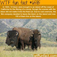 Catalina Island - WTF fun facts
