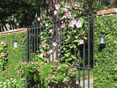 A wrought iron garden gate with vine-covered walls on each side.